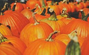 Картинка осень, урожай, тыквы