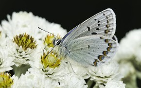Картинка макро, цветы, бабочка, маргаритки, Martin Dollenkamp
