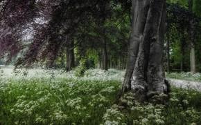 Картинка деревья, пейзаж, ветки, природа, парк, травы, цветение, Голландия, Jan-Herman Visser
