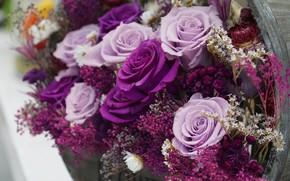 Картинка розовый, розы, букет, лиловый