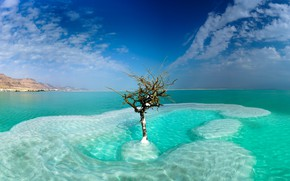 Картинка море, небо, облака, дерево, Израиль, Dead Sea, Neve Zohar