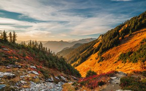 Картинка USA, forest, sky, trees, nature, sunset, flowers, mountains, rocks, landscapes, slope, sunlight, terrain, 4k ultra …