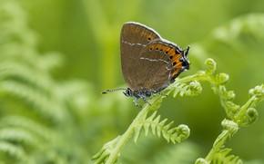 Картинка макро, бабочка, зелёный фон