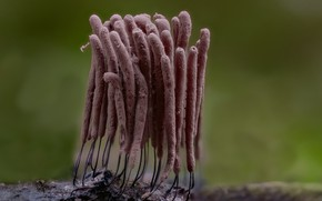 Картинка макро, природа, фон, грибы, пучок, Beat Buetikofer