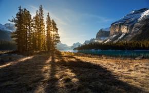 Картинка деревья, пейзаж, горы, природа, озеро, берег, ели, Канада, тени, Альберта, Jasper, леса, национальный парк