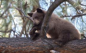 Картинка дерево, медведь, медвежонок
