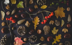 Картинка autumn, leaves, nuts