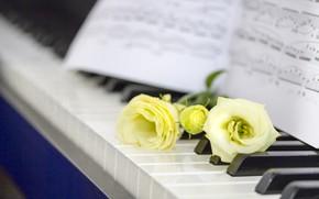 Картинка цветы, ноты, Пианино, эустома