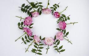 Картинка белый, фон, розы, рамка, Круг, Розовые, Листочки