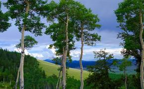 Картинка небо, облака, деревья, горы, склон, осины