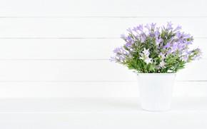 Картинка белый, цветы, фон, букет, фиолетовые, ведерко