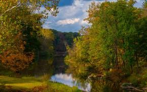 Картинка зелень, природа, озеро
