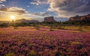 Картинка поле, солнце, горы, скалы, утро, Аризона, клевер, США, Sedona