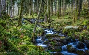Картинка лес, деревья, мост, ручей, мох