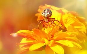 Картинка лето, макро, лучи, свет, цветы, оранжевый, желтый, фон, яркие, паутина, паук, желтые, лепестки, боке