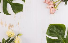 Картинка розы, листья, эустома