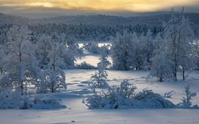 Картинка зима, лес, снег, деревья, Финляндия, Finland, Lapland, Лапландия