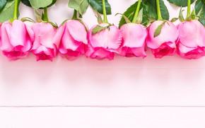 Картинка цветы, розовый, розы, бутоны