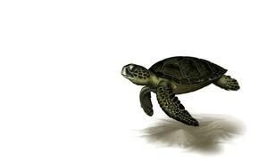 Картинка рендеринг, черепаха, арт, Leslie Casilli, Sea Turtle