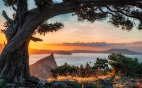 Картинка море, пейзаж, природа, камни, дерево, скалы, берег, утро, Крым, сосна, Новый Свет