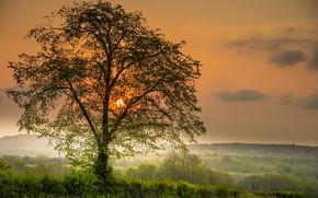 Картинка закат, фото, дерево, солнце небо