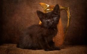 Картинка кошка, взгляд, поза, темный фон, котенок, черный, малыш, мордочка, кувшин, натюрморт, котёнок, сидит, мешковина, керамический