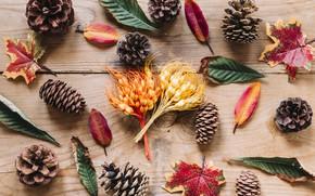 Обои осень, листья, фон, дерево, colorful, шишки, wood, background, autumn, leaves, осенние, maple