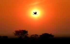 Картинка солнце, закат, птица, силуэт, журавль
