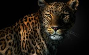 Картинка глаза, леопард, клыки, leopard, eyes, fangs, Pedro Jarque