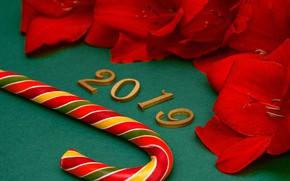 Картинка Новый Год, цифры, red, background, New Year, petals, decoration, Happy, 2019
