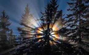 Картинка зима, лес, солнце, свет, снег, деревья, природа, радуга, спектр, утро, ели