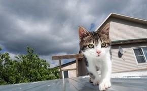 Картинка кошка, кот, котёнок, Cat