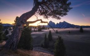 Картинка закат, горы, дерево, долина