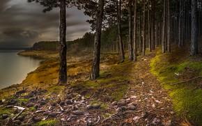Картинка лес, деревья, тучи, река, берег, склон, сосны, шишки, тропинка, водоем