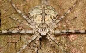 Картинка глазки, паук, насекомое