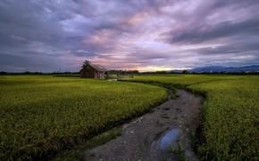 Картинка дорога, поле, лето, дом