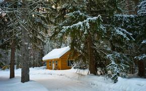 Картинка зима, дорога, крыша, лес, снег, ветки, природа, уют, дом, стволы, ели, сугробы, деревянный, сосны, домик, …