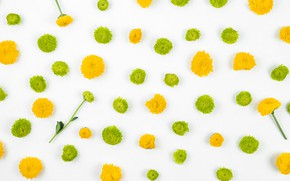 Картинка белый, цветы, фон, green, flower, yellow