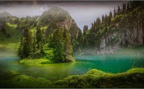 Картинка деревья, озеро, остров