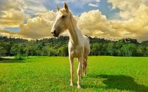 Картинка лес, облака, лошадь, луг