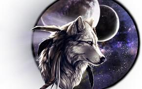 Картинка фон, волк, рамка