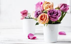 Картинка розы, букет, Oxana Denezhkina