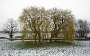 Картинка пляж, трава, снег, река, Весна, паводок, ива.