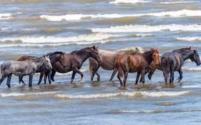 Картинка море, волны, природа, кони, лошади, купание, водоем, много, табун