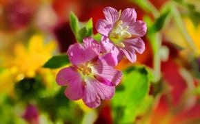 Картинка макро, лепестки, ярко, цветочки, боке