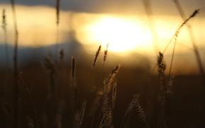 Картинка закат, фон, травинки