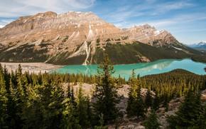 Картинка лес, небо, облака, пейзаж, горы, природа, озеро, отражение, берег, склоны, вершины, высота, ели, Канада, Альберта, …