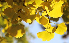 Картинка осень, листья, свет, ветки, желтые, боке, осенние листья