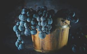Картинка темный фон, виноград, ведро, натюрморт, кадка