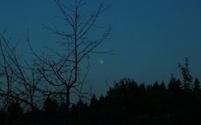 Картинка лес, небо, деревья, природа, луна, сумерки